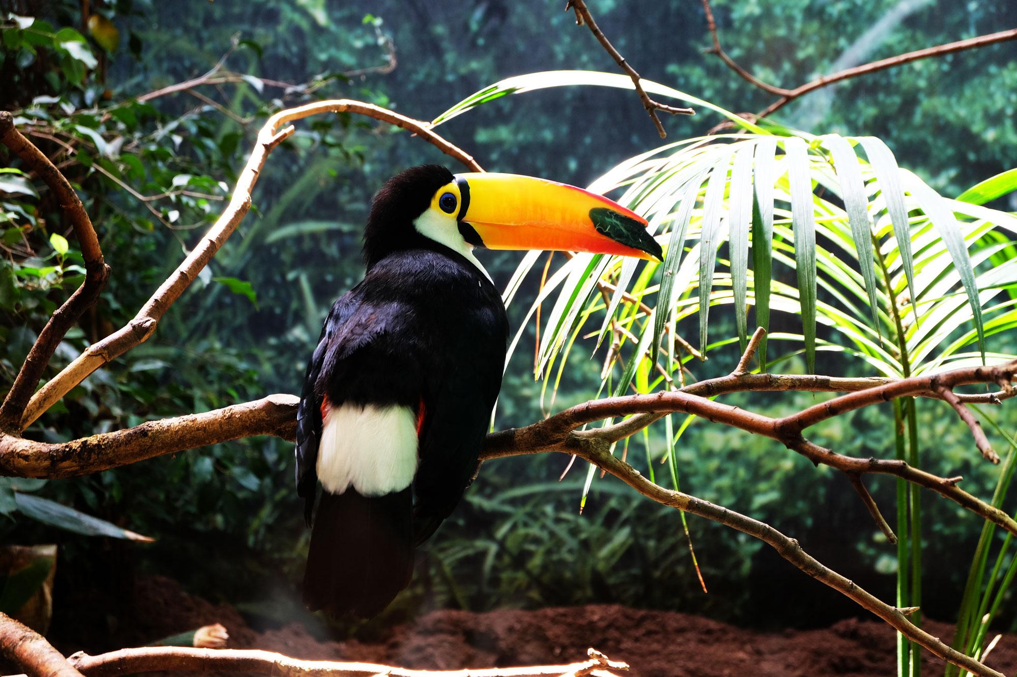 zoo-barcellona-tucano