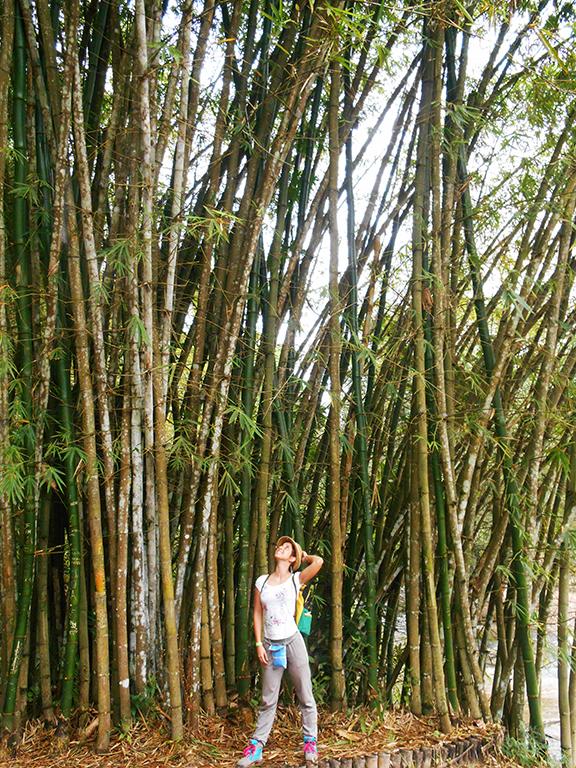 Congo natura alberi