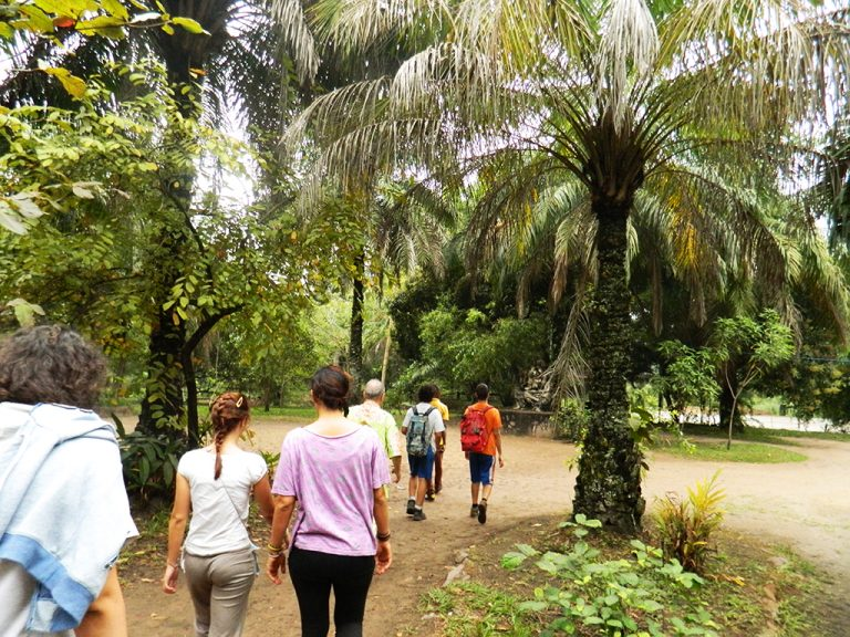 Foresta Lola Ya Bonobo