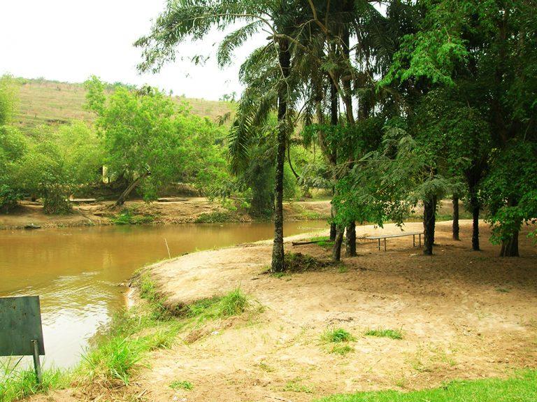 Foresta verde Congo