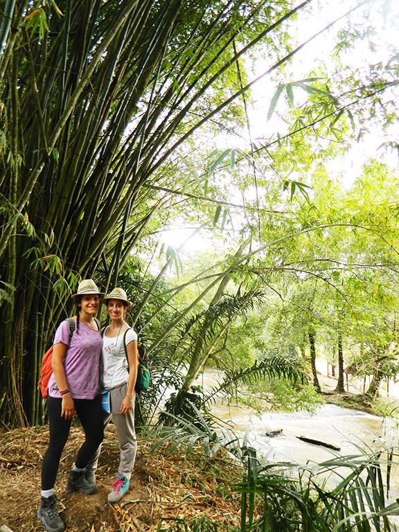 Parco Bonobo Congo