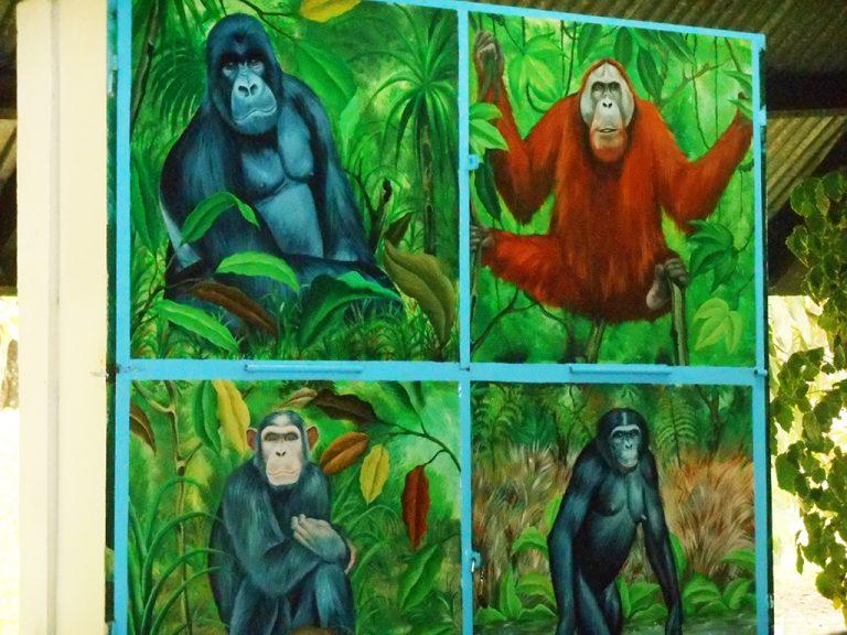 Scimmie Congo
