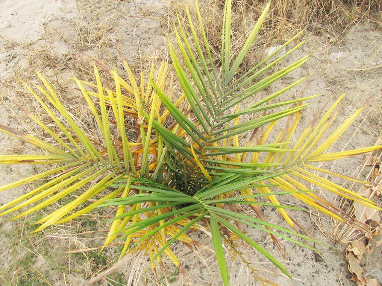 Vegetazione Congo